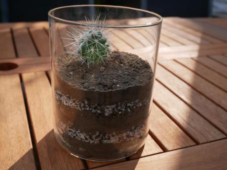 Terrarium pour cactus