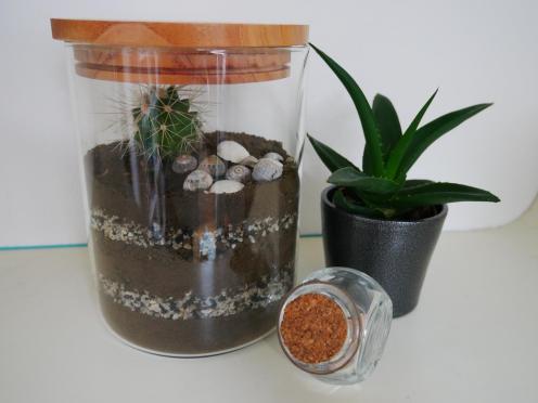 Terrarium pour cactusTerrarium pour cactus